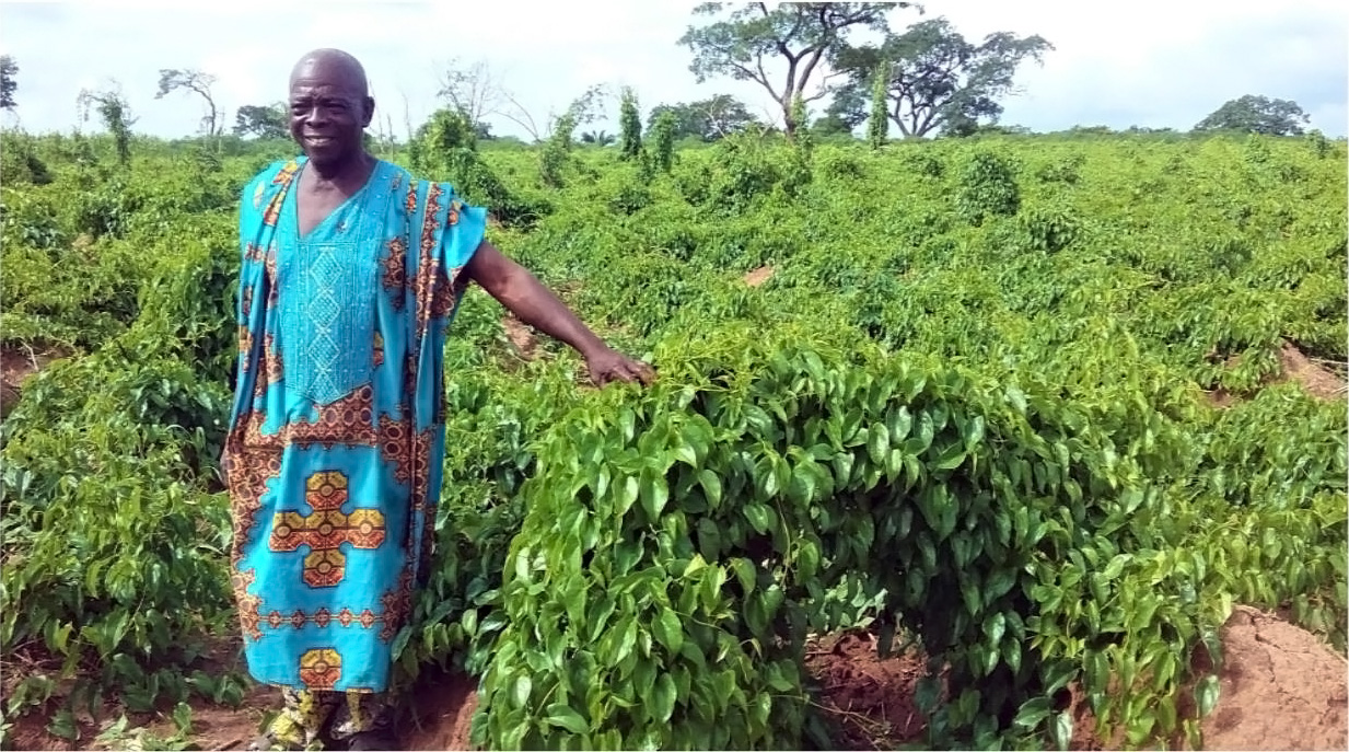 When yam makes a family happy: an early adopter is reaping the benefits of YIIFSWA promoted improved varieties